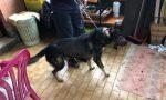 Bimba aggredita da due cani: gravi ferite a collo e torace