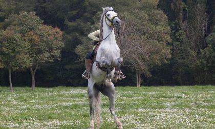 Cavallo investito sulla linea ferroviaria Torino-Milano: traffico bloccato per un'ora