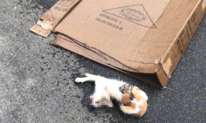 Bimbo di 5 anni lancia una gattina di tre mesi dal balcone, vano il tentativo di salvarla