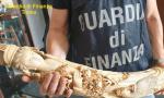 Sventato business clandestino di manufatti ricavati da zanne d'elefante VIDEO
