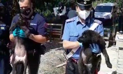 Scoperti sedici cani abbandonati in un canile abusivo FOTO E VIDEO