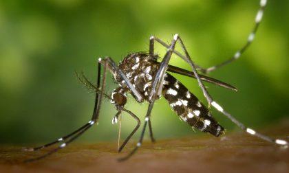 Zanzare e malaria ci proteggono dal Covid