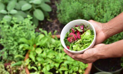 Un progetto che mette al centro cibo e solidarietà per il benessere di tutti (anche dell'ambiente)