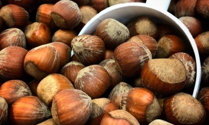 L'oro delle Langhe quest'anno viene svenduto mettendo in ginocchio le aziende agricole