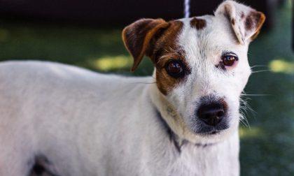 Si porta via il cane per ricattare l'ex, ma il piano naufraga in fretta