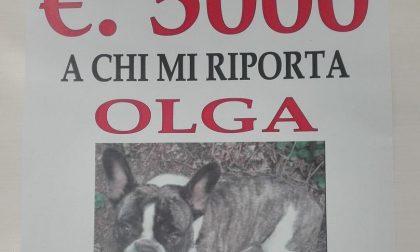 Ricompensa di 5mila euro a chi gli riporta il cane: tutti in cerca di Olga
