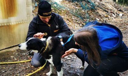 Lo studio: cosa incide sulle performance dei cani da ricerca che spesso ci salvano la vita in situazioni estreme?