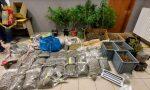 Si spacciavano per coltivatori di canapa: arrestati in 7 con oltre 63 kg di droga FOTO