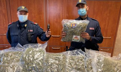 """Vicepresidente del circolo, anzi no… pusher: il fiuto di """"Evan"""" scova 17 chili di marijuana"""