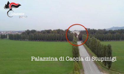 Cannabis nel parco di Stupinigi, carabinieri sequestrano una piantagione