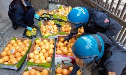 Scoperta montagna di frutta marcia nello scantinato del condominio