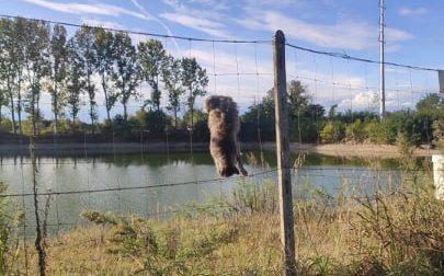 Gatto ucciso e appeso a penzoloni nella rete del laghetto