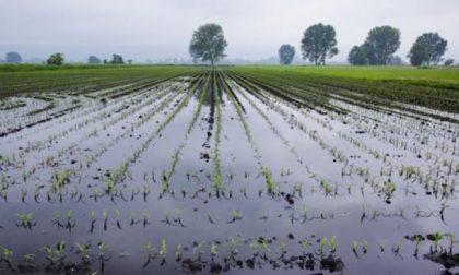 I danni all'agricoltura (e all'economia) dopo l'alluvione: la situazione nel Torinese