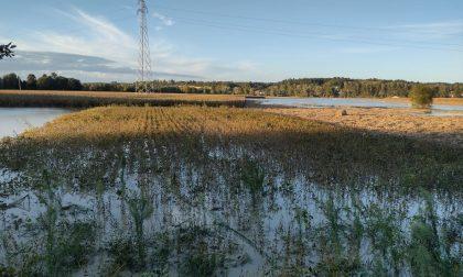 Alluvione in Piemonte: ponti crollati ma anche paesi, campi e strade allagati