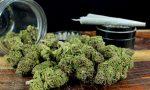 """Serra con 61 piante di """"maria"""" in cantina, arrestato spacciatore col pollice verde"""