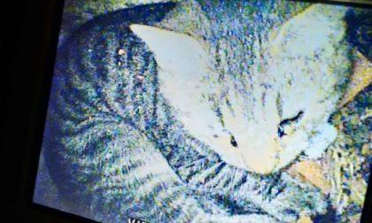 Solo tanta paura per il gattino caduto in una canna fumaria e recuperato dai Vigili del fuoco