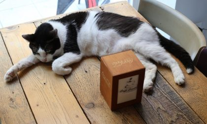 Dopo 7 anni chiude il Miagola Caffè, il primo bar per gatti in Italia