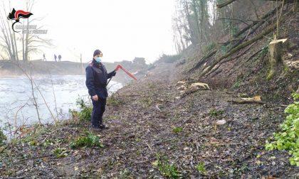Abbattono 70 alberi in area protetta dai beni paesaggistici: agricoltori denunciati