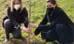 Giornata nazionale per le vittime del Coronavirus: un bosco per non dimenticare