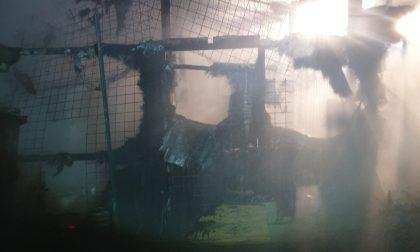 A fuoco la casetta dei cani, animali tratti in salvo dalla proprietaria