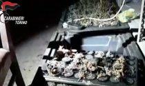 Produce droga in casa, ristoratore arrestato dai carabinieri IL VIDEO