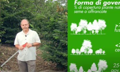 Il bosco e l'uomo: la Regione valorizza il suo patrimonio forestale anche con un film