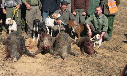 """La carne degli animali uccisi nei """"piani di contenimento"""" va agli enti di assistenza e solidarietà sociale"""