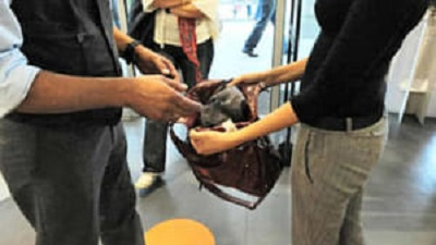Giovani ladre, con documenti falsi, arrestate nel negozio che volevano derubare