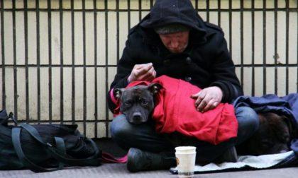 Il Regolamento che toglieva i cani ai senzatetto è stato ritirato