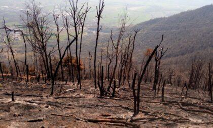 Rimboschimenti sul Musinè: tecnici al lavoro per ovviare ai danni dei recenti incendi