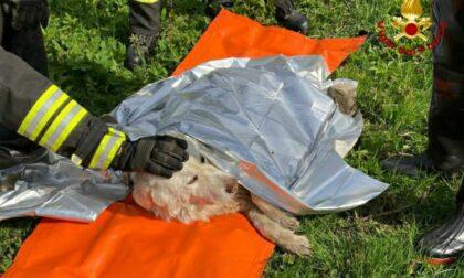 Cane in difficoltà nel torrente Pellicciotto: salvato dai Vigili del Fuoco