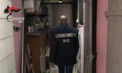 In macelleria 920 chili di carne in cattivo stato di conservazione: chiusa attività