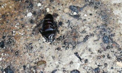 Nella cucina del ristorante insetti morti e un uccello che svolazza: sequestrati oltre 65 chili di alimenti