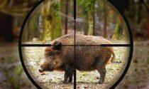 """Animalisti d'assalto difendono i cinghiali: """"Tutta colpa dei cacciatori"""""""