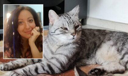 Arrestato il gatto No Tav: il Tribunale vieta la visita del veterinario