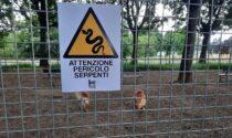 Serpenti nel parco: la denuncia di Torino Tricolore