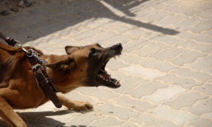 Prima aggredisce a calci e ginocchiate i poliziotti, poi gli aizza contro il cane