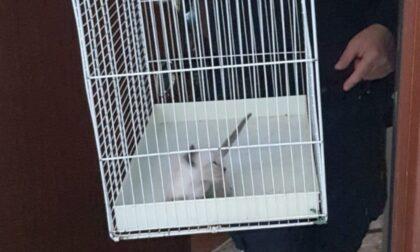 In appartamento 42 gatti in pessime condizioni igieniche: denunciate le proprietarie