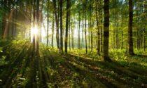 Collegno polmone verde di Torino: 11mila nuovi alberi in arrivo