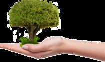 In arrivo 70.000 alberi nell'area metropolitana per limitare gli effetti del cambiamento climatico