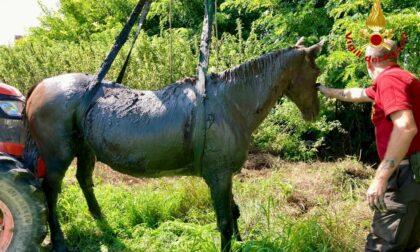 Cavallo scivola in un canale fangoso: imbragato e portato in salvo
