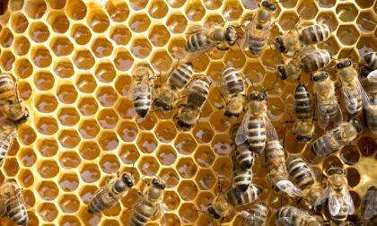 Più di un milione di euro per gli apicoltori piemontesi