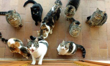 Accumulatrice seriale di gatti nei guai: a casa sua 25 felini e una bambina