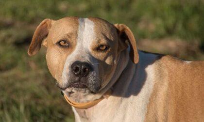 Sessantenne morta sbranata dal suo cane