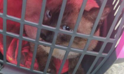Incendio in via Carlo Vidua, i Vigili del Fuoco salvano un gattino