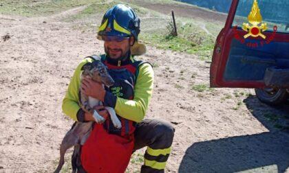 Cucciolo di cane da pastore finisce in un dirupo, salvato dai Vigili del fuoco